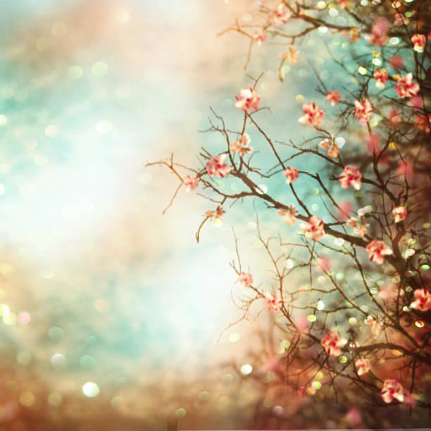 printemps abstrait avec arbre de magnolia. - en fleurs photos et images de collection