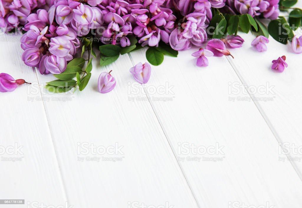 Spring acacia flowers royalty-free stock photo