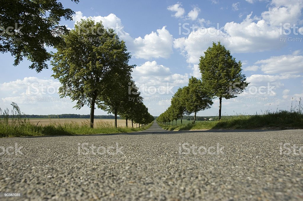 spring alley road royalty-free stock photo