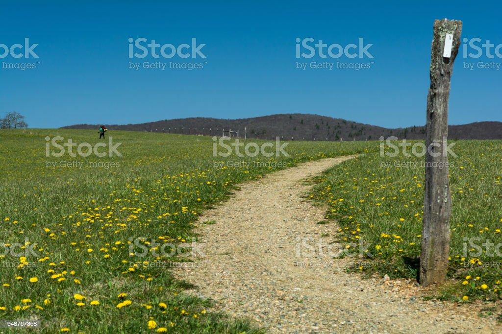 Spring Along the Appalachian Trail stock photo