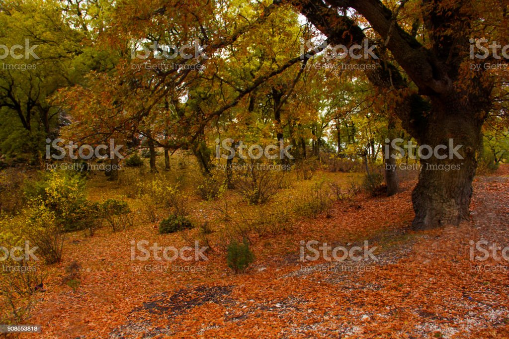 Spring and colorful forest stock photo