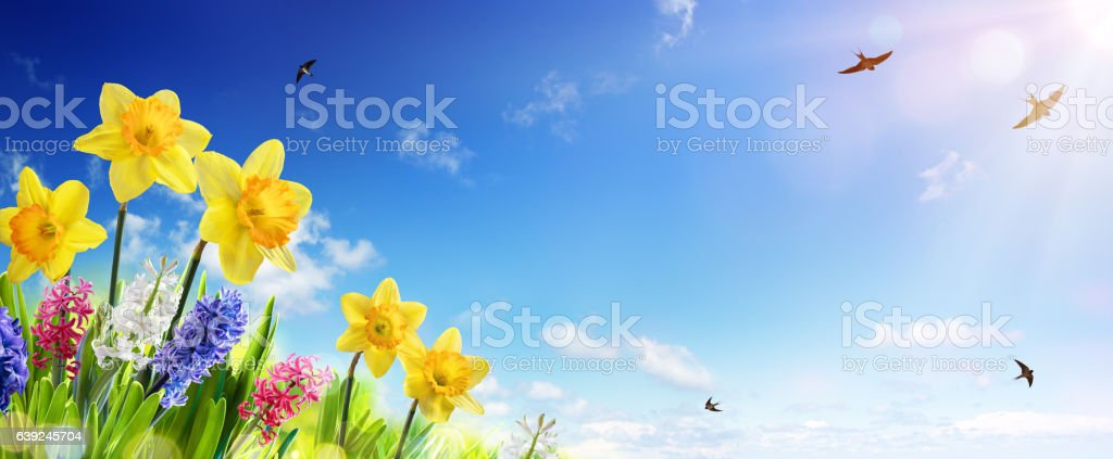Spring And Easter Banner stock photo