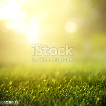 513070488 istock photo Spring and nature background concept, Close up green grass field background and sunlight. 1152864183