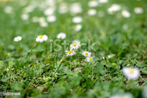 513070488 istock photo Spring and nature background concept 1039761698