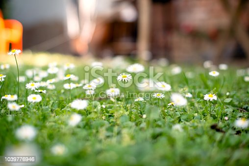 513070488 istock photo Spring and nature background concept 1039776946