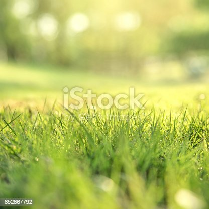 513070488 istock photo Spring and nature background concept 652867792