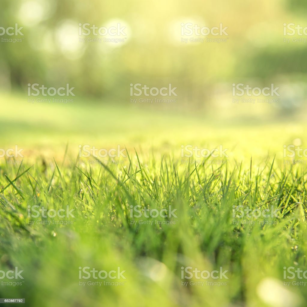 Spring and nature background concept stock photo