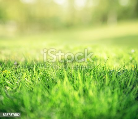513070488 istock photo Spring and nature background concept 653787582