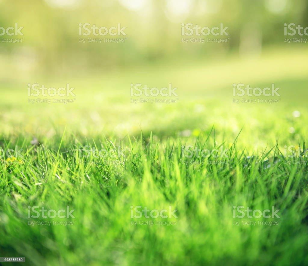 Frühling und Natur Hintergrund-Konzept – Foto