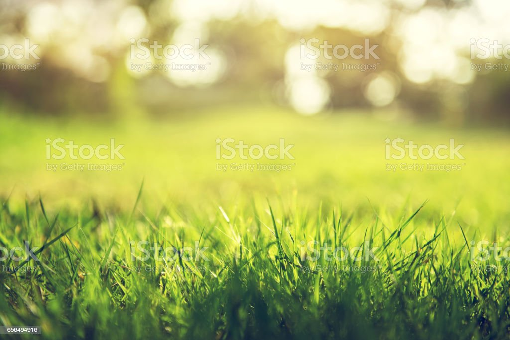 Spring and nature background concept