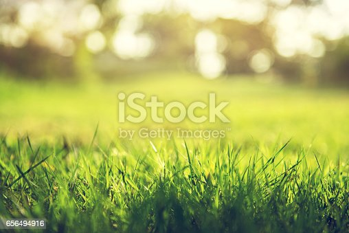 513070488 istock photo Spring and nature background concept 656494916