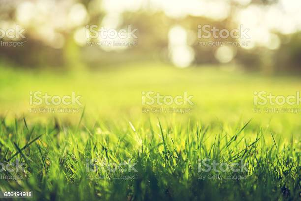 Spring and nature background concept picture id656494916?b=1&k=6&m=656494916&s=612x612&h=xc6df3ycsy58160rcvhuodoismxyxap9qctu2ymndu4=