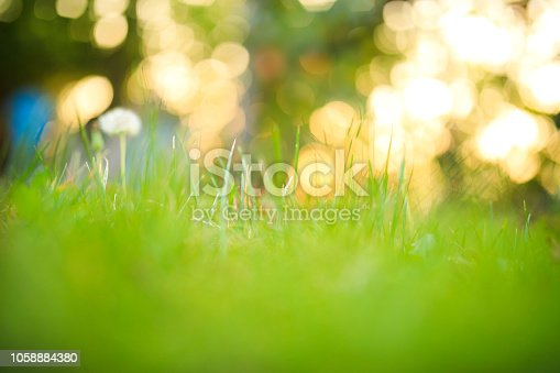 istock Spring and nature background 1058884380