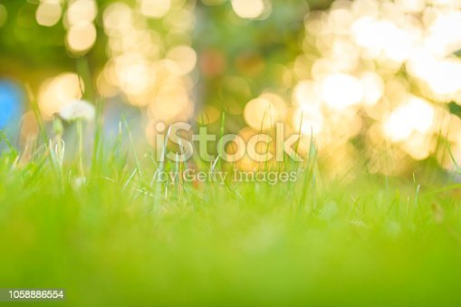 istock Spring and nature background 1058886554