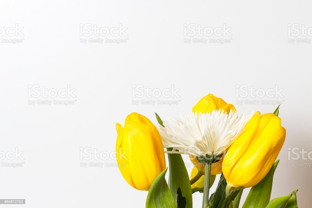 흰색 바탕에 봄, 여름 꽃입니다. 노란 튤립과 흰 국화 배경입니다. 봄 분위기와 아름 다운 신선한 꽃 - 로열티 프리 개화기 스톡 사진