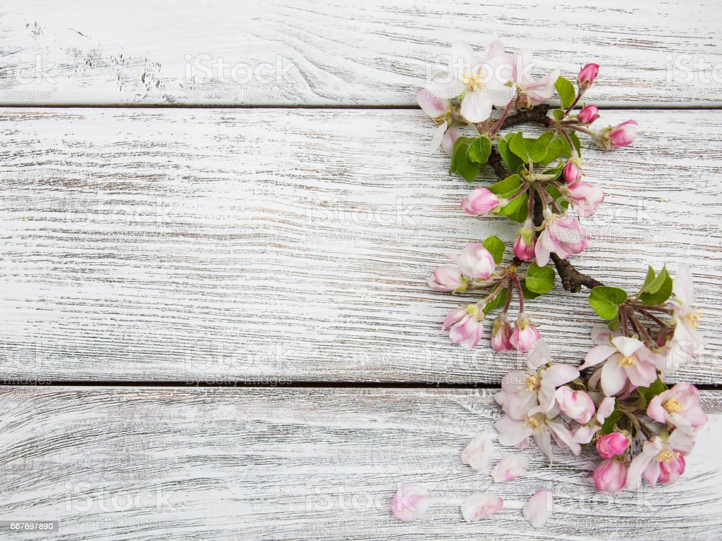 Spring apple blossom stock photo