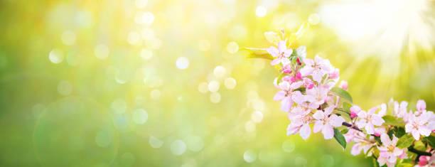 Spring apple blossoms picture id1199100389?b=1&k=6&m=1199100389&s=612x612&w=0&h=kg68fd hgi tijbfbbp1jen66pj4bto6glirsqs5s7k=