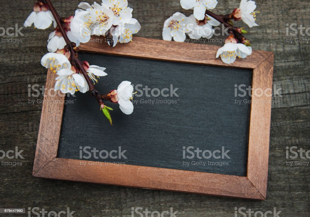 Spring apricot  blossom and blackboard royalty-free stock photo