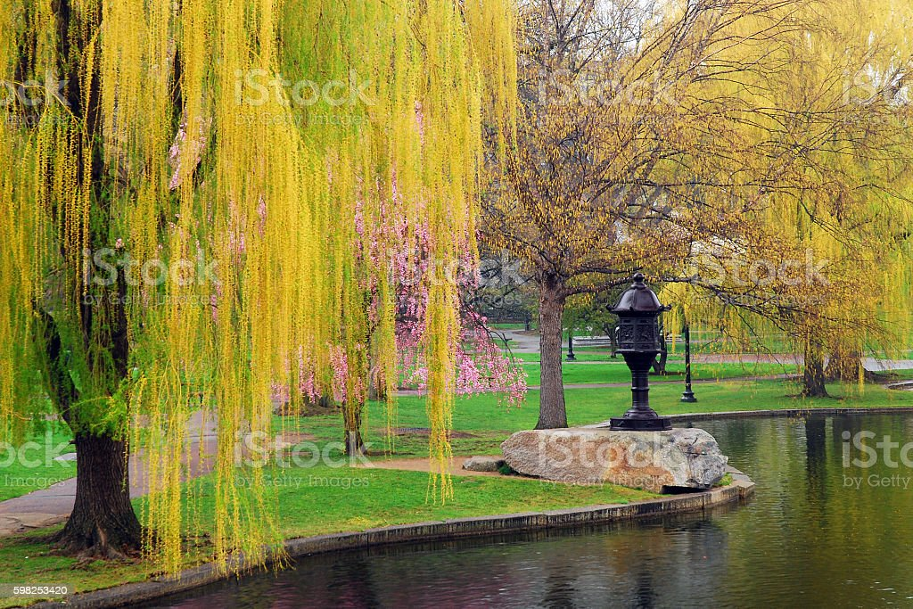Spring Arrives at Boston Common stock photo