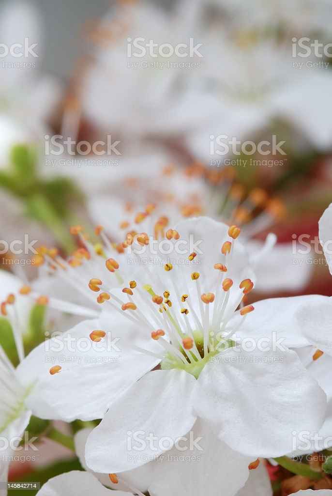 Spring arrives royalty-free stock photo