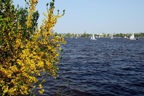 Frühling am alster lake – Foto