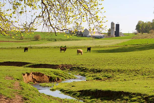 Spring at Amish land