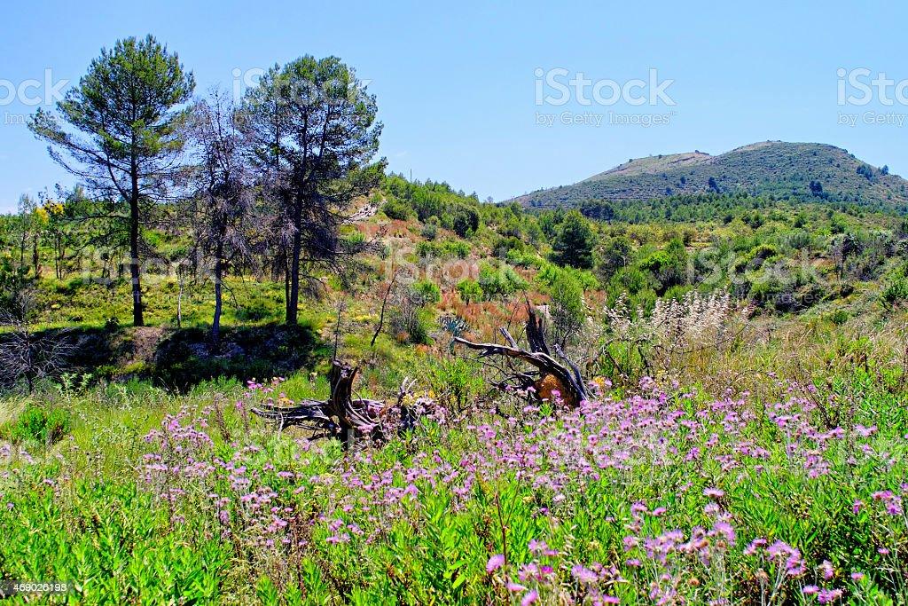 Primavera nos campos - foto de acervo