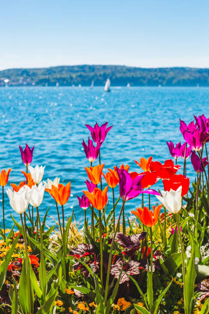 Spring at Lake Constance, Überlingen, Germany Lake Constance, Überlingen, Baden-Württemberg, Germany Bodensee stock pictures, royalty-free photos & images