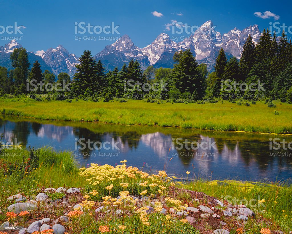 Spring at the Tetons (P) stock photo