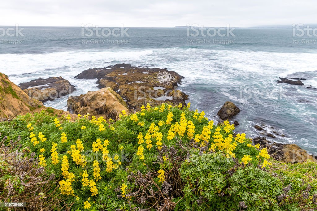 Spring atTomales Point of Point Reyes National Seashore, California stock photo