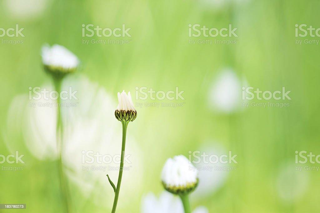 Spring Awakening royalty-free stock photo