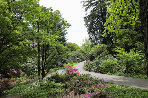 Three paths meet in the azalea garden in the park