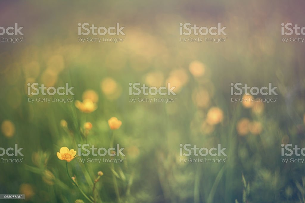 Spring background. Bright fresh meadow flowers  closeup royalty-free stock photo