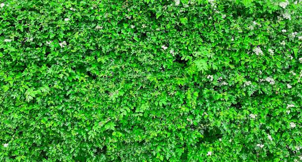 Frühlingshintergrund, grüne Blätter, Gras – Foto