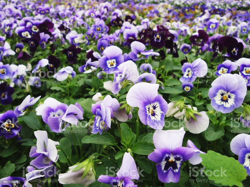 Spring background. Many colors spring freshness royalty-free stock photo