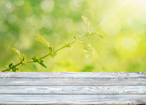 Frühlingshintergrund – Foto