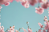 istock Spring Background 1297176215