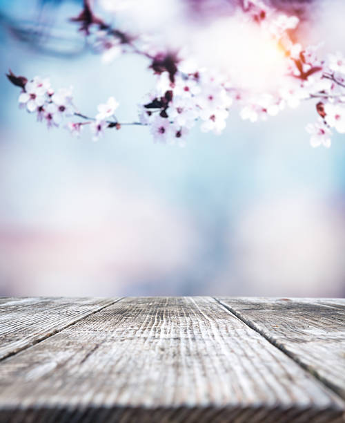 spring background - sakura background stock photos and pictures
