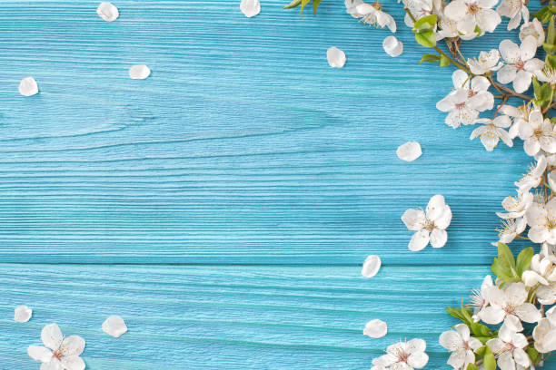 spring background - spring stock pictures, royalty-free photos & images