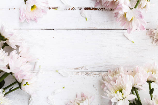 spring background - june stock photos and pictures
