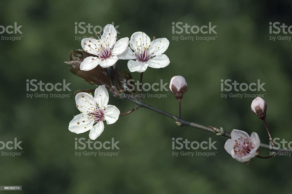 spring background royalty-free stock photo