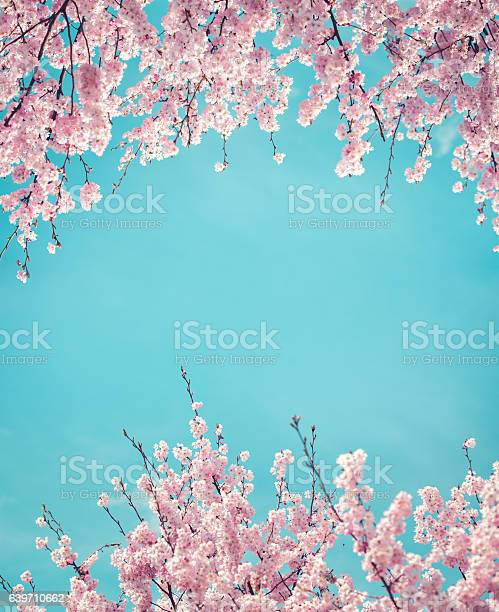 Spring background with cherry flowers picture id639710662?b=1&k=6&m=639710662&s=612x612&h=2bfcqepyqxh8qu1xobz6v8xf 46d k3flc tjrmilx4=