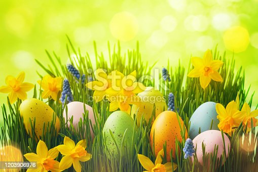 639245704 istock photo Spring background with Easter eggs in green grass and daffodil flowers. 1203906976