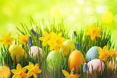 Spring background with Easter eggs in green grass and daffodil flowers in sunlight bokeh.