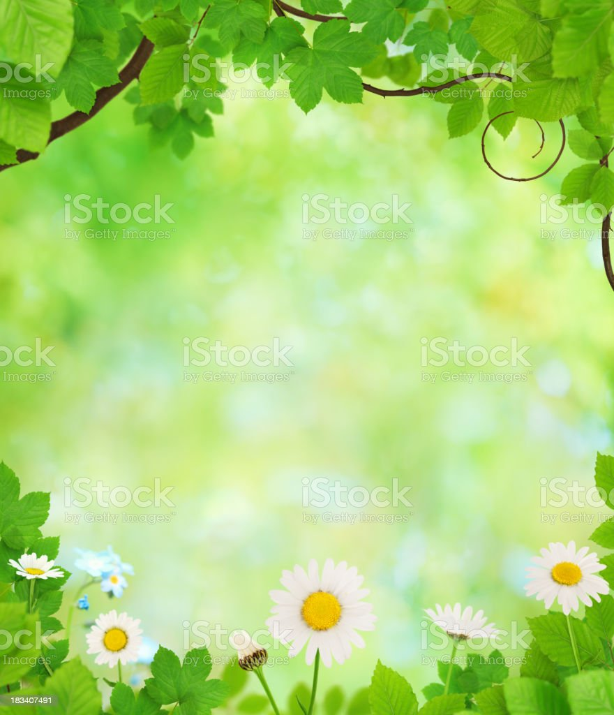 Spring Background With Leaves And Flowers royalty-free stock photo