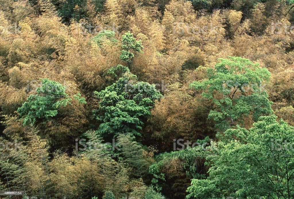 スプリングの竹 ロイヤリティフリーストックフォト