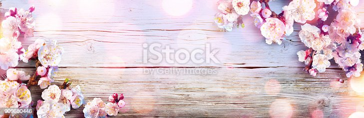 istock Spring Banner - Pink Blossoms On Wooden Plank 909680446