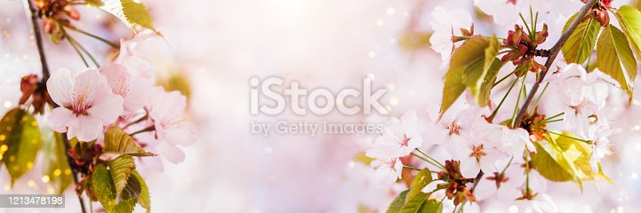 909680446 istock photo Spring banner with pink cherry blossom and bokeh. 1213478198