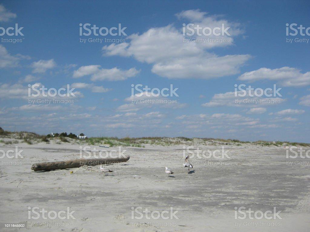 Spring Beach Trip stock photo