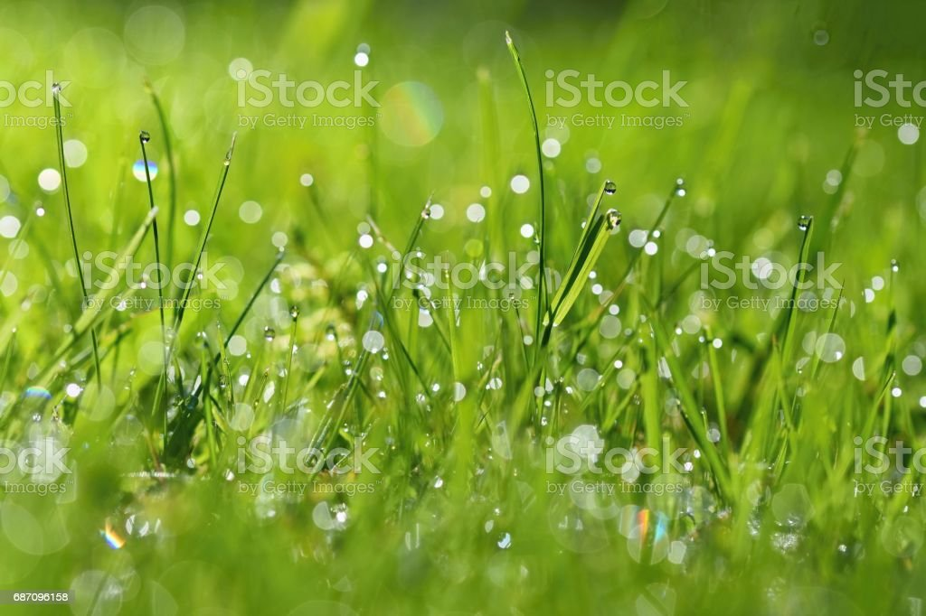 Spring. Beautiful natural background of green grass with dew and water drops. Seasonal concept - morning in nature. Lizenzfreies stock-foto